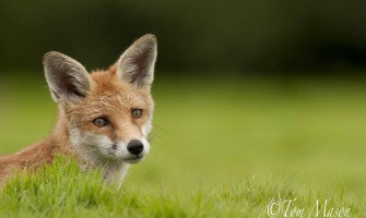 Local Wildlife Photography Live with Tom Mason