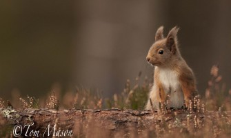 Wildlife Photography - 5 Tips from Tom Mason